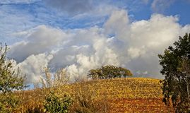 Clouds and autum colors in the vineyards stock photography