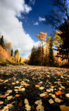 Clouds and autumn leaves. Along British Columbia back road Stock Images