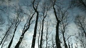 Clouds and bare trees  flicker reflection. Clouds and bare trees  flicker reflected in water stock footage