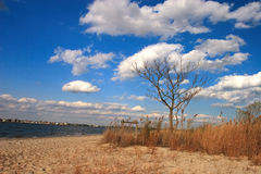 Clouds on beach. Blue skies with white clouds on beach on bay in new jersey state park. Sky is polarized royalty free stock photography