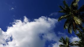 Clouds behind palm trees time lapse. A time lapse video showing movement and transformation of cumulus clouds behind palm tree silhouettes in Valencia, Dumaguete stock video