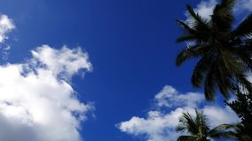 Clouds behind palm trees time lapse. A time lapse video showing movement and transformation of cumulus clouds behind palm tree silhouettes in Valencia, Dumaguete stock footage