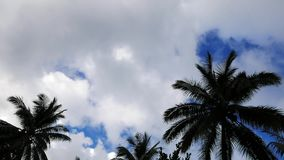 Clouds behind palm trees time lapse stock video