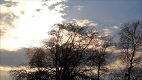 Clouds behind trees, fast motion, timelapse. Clouds in fast motion behind trees stock footage