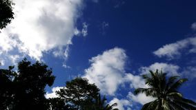 Clouds behind trees time lapse. A time lapse video showing movement and transformation of cumulus clouds behind tree silhouettes in Valencia, Dumaguete City stock footage