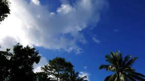 Clouds behind trees time lapse. A time lapse video showing movement and transformation of cumulus clouds behind tree silhouettes in Valencia, Dumaguete City stock video footage