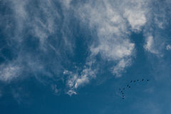 Clouds and a blue sky with a bunch of flying birds Stock Photos