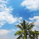 Clouds in blue sky and coconut trees. White clouds in blue sky and coconut trees Stock Image