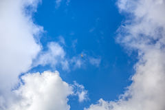 Clouds with blue sky , flying seagull.  Royalty Free Stock Photo