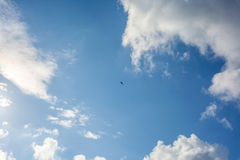 Clouds with blue sky , flying seagull.  Stock Image