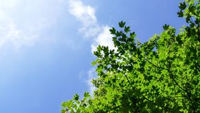 Clouds blue sky and green leaves Royalty Free Stock Images