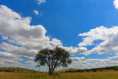 Clouds, blue sky and a lone tree Royalty Free Stock Photography
