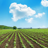 Clouds in blue sky over green agricultural field Stock Photography
