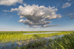 Clouds in the blue sky over a green pond overgrown with reeds. Royalty Free Stock Image