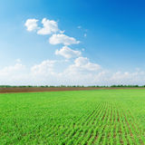 Clouds in blue sky over green spring field Royalty Free Stock Photography