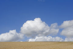 Clouds in blue sky over sunny barley field Royalty Free Stock Image