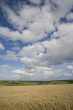 Clouds in blue sky over sunny wheat field and countryside Stock Image