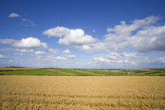 Clouds in blue sky over sunny wheat field and countryside Royalty Free Stock Photos