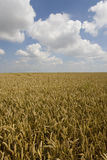 Clouds in blue sky over wheat field Stock Photography