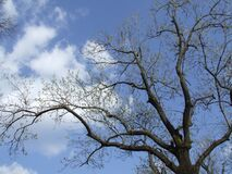 clouds-through-branches Royalty Free Stock Photos