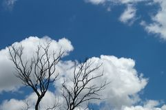 Clouds in the branches of trees. Silhouettes of dry branches against a blue cloudy sky for creative abstract nature background. Image Stock Images