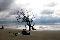 Clouds and Contrast on Boneyard Beach. Clouds give a dramatic feel to the Boneyard Beach on Bull's Island S.C. Cape Romain Wildlife Refuge Stock Photos