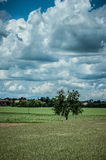 Clouds. Country landscape with tree and clouds Stock Photography