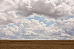 Clouds covering the field of cereal Royalty Free Stock Photo