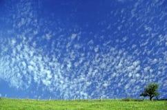 clouds den små fjädern Royaltyfri Fotografi