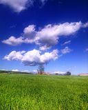Clouds in the field Royalty Free Stock Photo