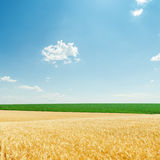 Clouds and fields with golden harvest Royalty Free Stock Photography