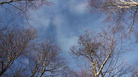 Clouds float high in the sky above the trees. Light white clouds float high in the sky above the trees stock video