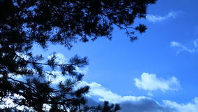 Clouds floating in the sky, branches swaying from a wind stock video footage