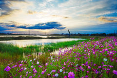 Clouds and flowers Royalty Free Stock Photography