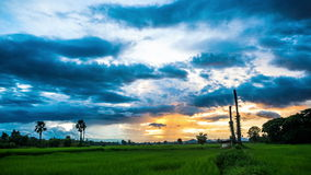 Clouds flowing over paddy field at sunset. Time laps stock video footage