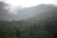 Clouds and fog in the gorge forested mountains. Clouds and fog on the tops of forested mountains and in the gorge Stock Photo