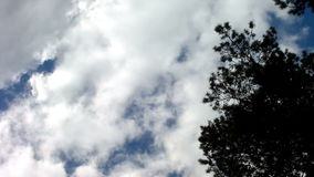 Clouds and forest stock video