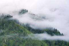 Clouds and forest Stock Photo