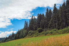 Clouds, forest, meadow. Royalty Free Stock Photo
