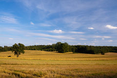 Clouds and grass. Blue sky and green grass in the poland Stock Photo