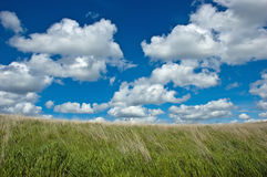 Clouds and grass. Fluffy white clouds scudding over a green grass field Royalty Free Stock Photo