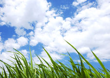Clouds and Grass Royalty Free Stock Images