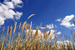 Clouds and grass. Beautiful clouds and grass in the nature royalty free stock photo