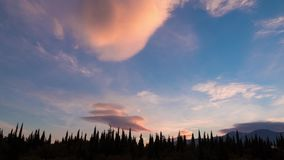 Clouds and green cypresses at sunset, time lapse, 4k. Clouds and beautiful green coniferous trees at sunset, time lapse, 4k stock footage
