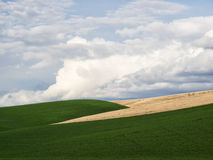 Clouds and green fields Royalty Free Stock Image