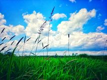 Summer sky over green grass. Clouds and green grass stock photography