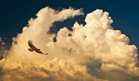 Clouds and hawk. A blue sky with clouds and a soaring hawk Stock Images