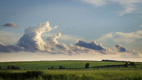 Clouds hovering over fields. Summer clouds hovering over fieldsSummer clouds and a flock of birds hovering over the fields Stock Image