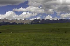 Clouds kiss grassland Royalty Free Stock Photos