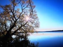 Trees on the lake stock photo